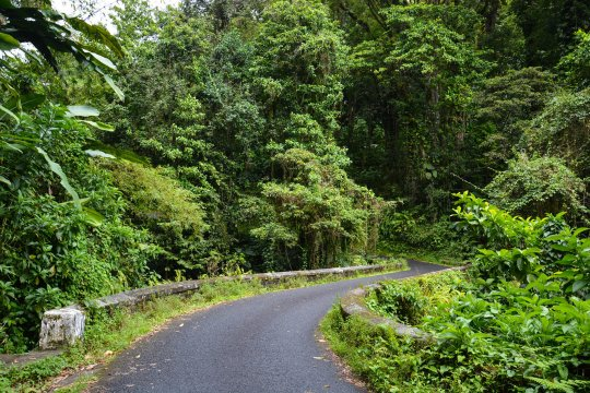Route de la Trace to Morne Rouge
